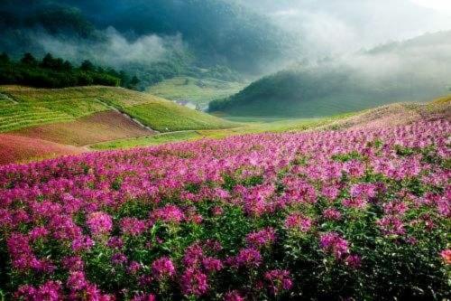 重庆巫溪红池坝旅游景区